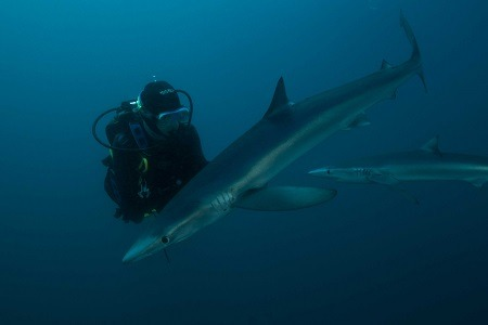 Scuba_Diving_with_Sharks_3c
